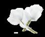 Kvetinová vôňa